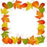 Jesień liścia granica Fotografia Royalty Free