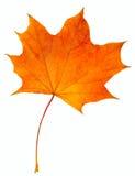 Jesień liścia klon odizolowywający Obraz Royalty Free