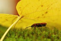 Jesień liścia osłona Obraz Stock