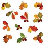 Jesień liścia set Spadek opuszcza ikony Natura symbol Fotografia Royalty Free