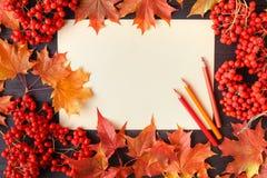 Jesień liścia skład dla obrazek ramy kosmos kopii Obrazy Stock