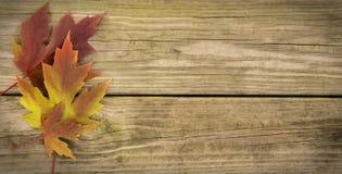 Jesień liścia tło Obrazy Royalty Free