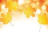 Jesień liścia tło. Obrazy Stock