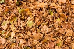 Jesień liścia tekstura Zdjęcie Royalty Free