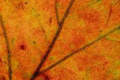 Jesień liścia tekstura Zdjęcia Royalty Free