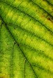 Jesień liścia tekstura Obrazy Royalty Free