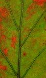 Jesień liścia tekstura Zdjęcie Stock
