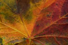 Jesień liście Zdjęcia Royalty Free