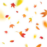 Jesień liście Fotografia Royalty Free