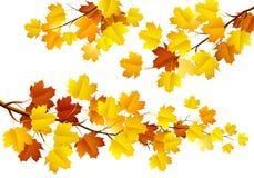Jesień liście Obrazy Royalty Free