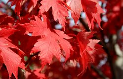 Jesień liście obraz stock
