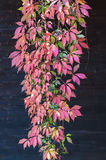 Jesień liście Zdjęcie Stock