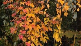Jesień liście zbiory