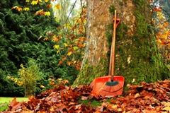 Jesień liście Zdjęcie Royalty Free