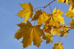 Jesień liście obrazy stock