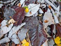 Jesień liście. Abstrakcjonistyczny tło. Fotografia Stock