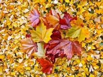 Jesień liście. Abstrakcjonistyczny tło. Fotografia Royalty Free
