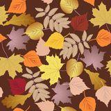 Jesień liście bezszwowy wzoru Zdjęcie Stock
