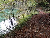 Jesień liście, Chorwacka natura, 4 Fotografia Royalty Free