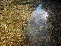 Jesień liście, Chorwacka natura, 10 Zdjęcia Stock