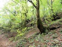 Jesień liście, Chorwacka natura, 3 Zdjęcia Royalty Free