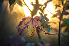 Jesień liście dekorują pięknego natury bokeh tło z Fotografia Stock