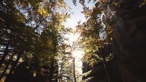 Jesień liście huśta się na drzewie w jesiennym parku zdjęcie wideo