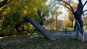 Jesień liście i Horyzontalny drzewo Obraz Stock