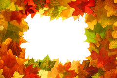 jesień liście jesienią fotografia stock