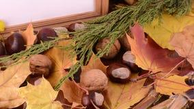 Jesień liście, klon, viburnum, sosna rożek, acorn i dokrętka na drewnianym tekstury tle z pustą kopii przestrzenią na fotografii  zdjęcie wideo