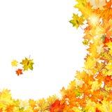 Jesień liście klonowi Fotografia Royalty Free