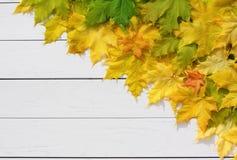 Jesień liście klonowi na białym drewnie Fotografia Stock