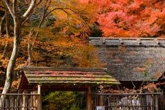 Jesień liście klonowi są na Japan stylu dachu Fotografia Royalty Free