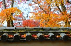 Jesień liście klonowy Zdjęcie Stock