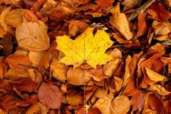 Jesień liście kolory natura - Kolorowa natura - Zdjęcia Royalty Free