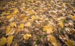 Jesień liście na łące Zdjęcie Royalty Free