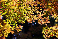 Jesień liście na światła słonecznego tle Zdjęcie Royalty Free