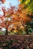Jesień liście na światła słonecznego tle Zdjęcia Royalty Free
