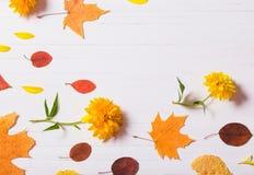 Jesień liście na białym drewnianym tle Obraz Royalty Free