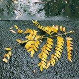 Jesień liście na deszczowym dniu Obraz Royalty Free