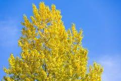 Jesień liście na gałęziastym agains niebie Fotografia Royalty Free
