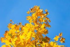 Jesień liście na gałęziastym agains niebie Obrazy Stock