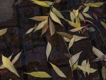 Jesień liście na mokrym ceglanym brukowaniu Zdjęcia Stock