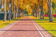 Jesień liście na pięknej alei Zdjęcie Stock