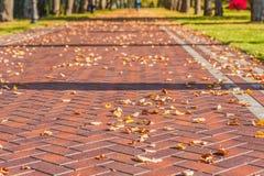 Jesień liście na pięknej alei Fotografia Royalty Free