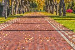 Jesień liście na pięknej alei Zdjęcia Royalty Free