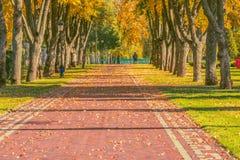 Jesień liście na pięknej alei Fotografia Stock
