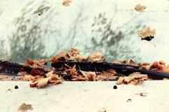 Jesień liście na samochodzie Fotografia Royalty Free