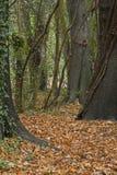 Jesień liście na Southampton błoniu zdjęcia stock