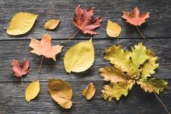 Jesień liście na starym drewnianym tle Zdjęcie Stock